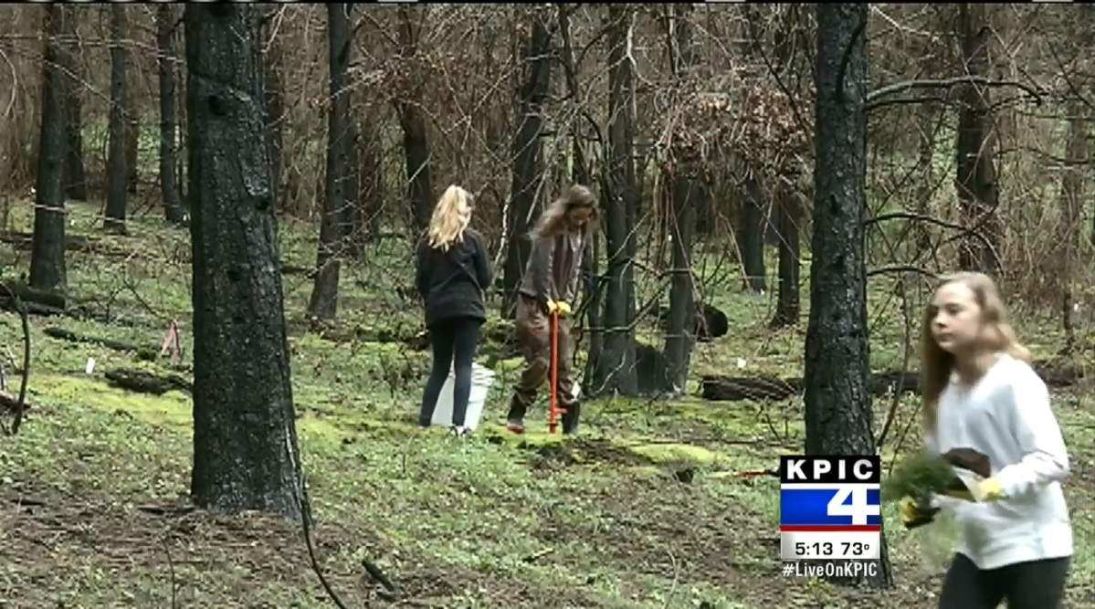 Middle schoolers from Cobb School in Roseburg replant trees at the site of the Horse Prairie Fire near Riddle, March 12, 2018. (KPIC)