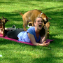 GMC crew relaxes with goat yoga at Honey Sweetie Acres