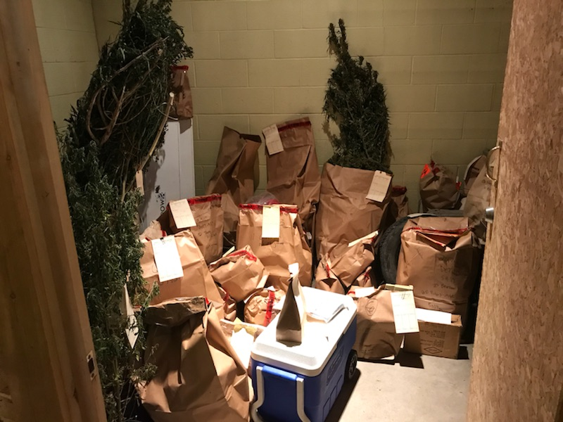 The Charlevoix County Sheriff's Office is overflowing with marijuana plants.{&amp;nbsp;}(Photos courtesy of Charlevoix County Sheriff's Office).<p></p>