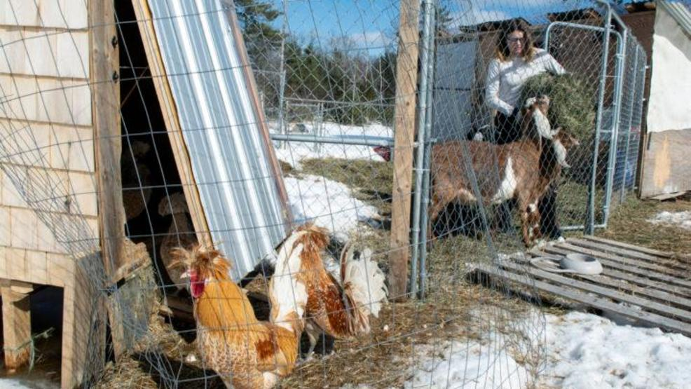 Fearing a trademark lawsuit, Maine's 'Hobbit Hill' farm agrees to change name