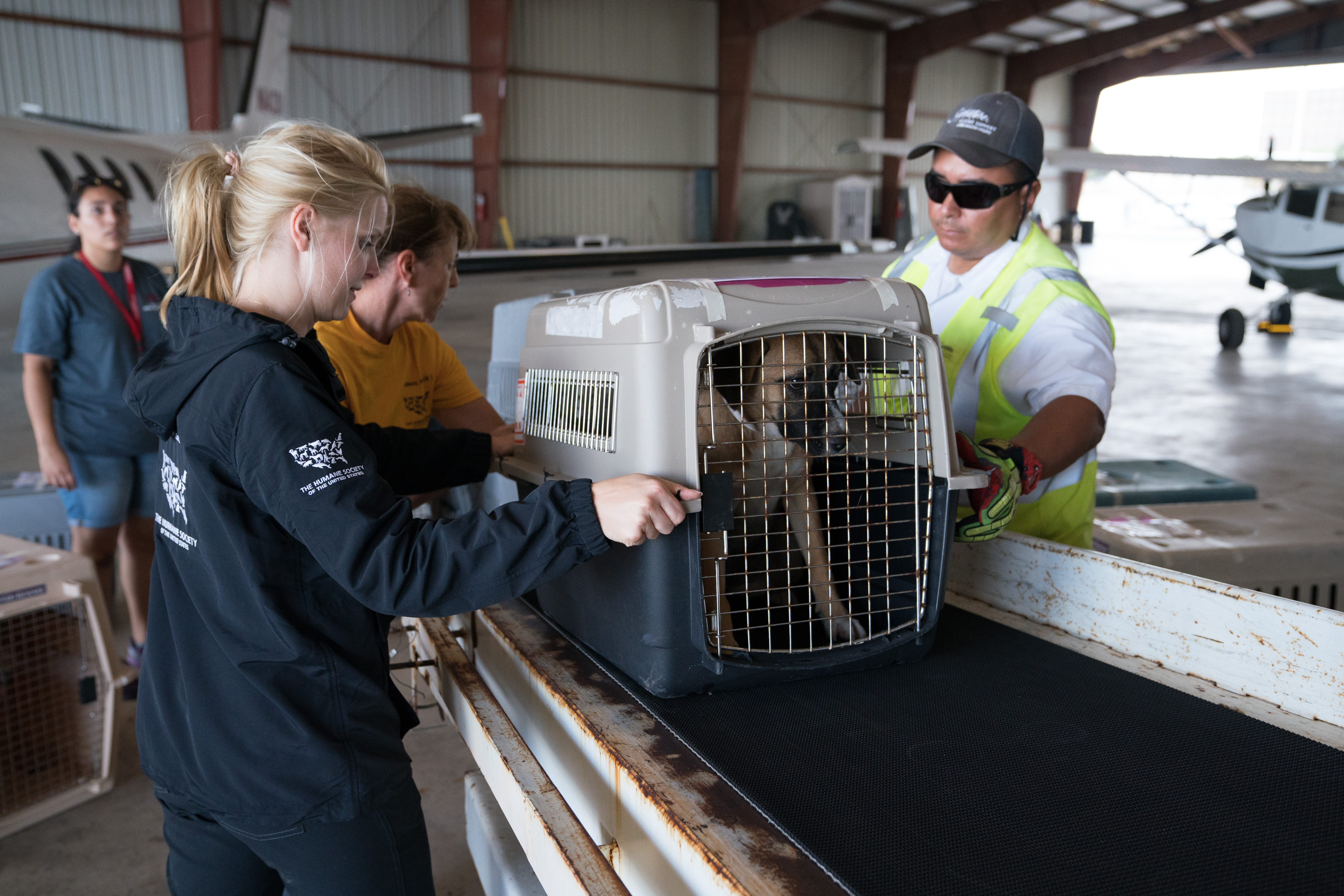 The Humane Society of the United States Texas State Director Katie Jarl, left, helps HSUS District Leader Shana Ellison load dogs onto a plane during The HSUS San Antonio Transport, Tuesday, Aug. 29, 2017, in San Antonio. Approximately one hundred dogs are being transported by Wings of Rescue to the east coast for adoption. (Darren Abate/AP Images for The Humane Society of the United States)