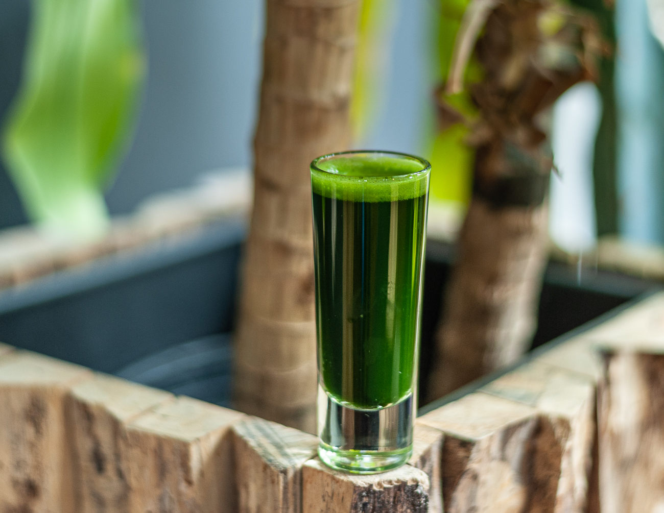 Wheat Grass Shot{ }/ Image: Kellie Coleman // Published: 12.27.20