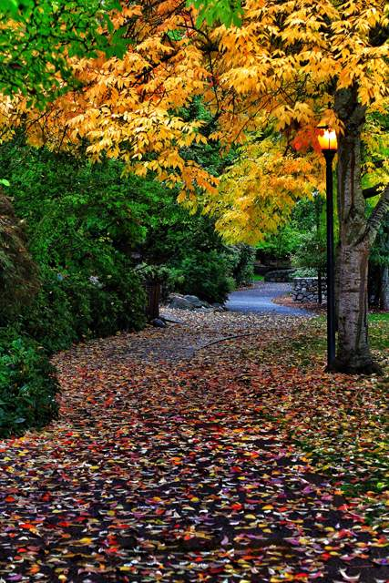 Rebecca Hodges captured Ashland's fall colors in Lithia Park.