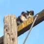 Cat rushed to veterinarian following rescue from electric pole