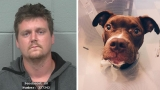 Man accused of dragging puppy behind truck in Brewer