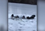 teens fall through ice1.JPG