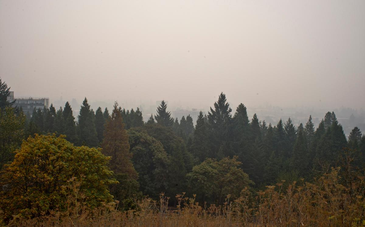 Downtown Eugene is completely hidden by smoke from nearby forest fires at midday on Sunday. This images was taken looking south from Spencer's Butte. Photo by Dan Morrison, Oregon News Lab