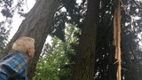 Lightning strikes at least four trees in SW Portland, sends debris flying